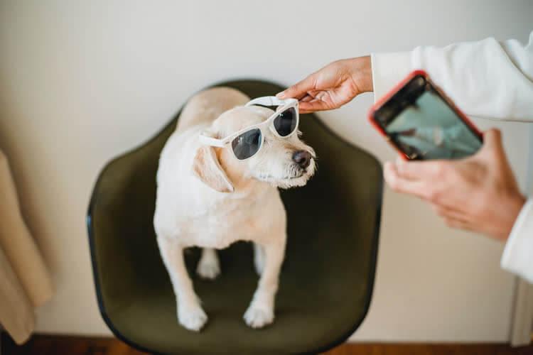 Собаку в очках снимают на телефон